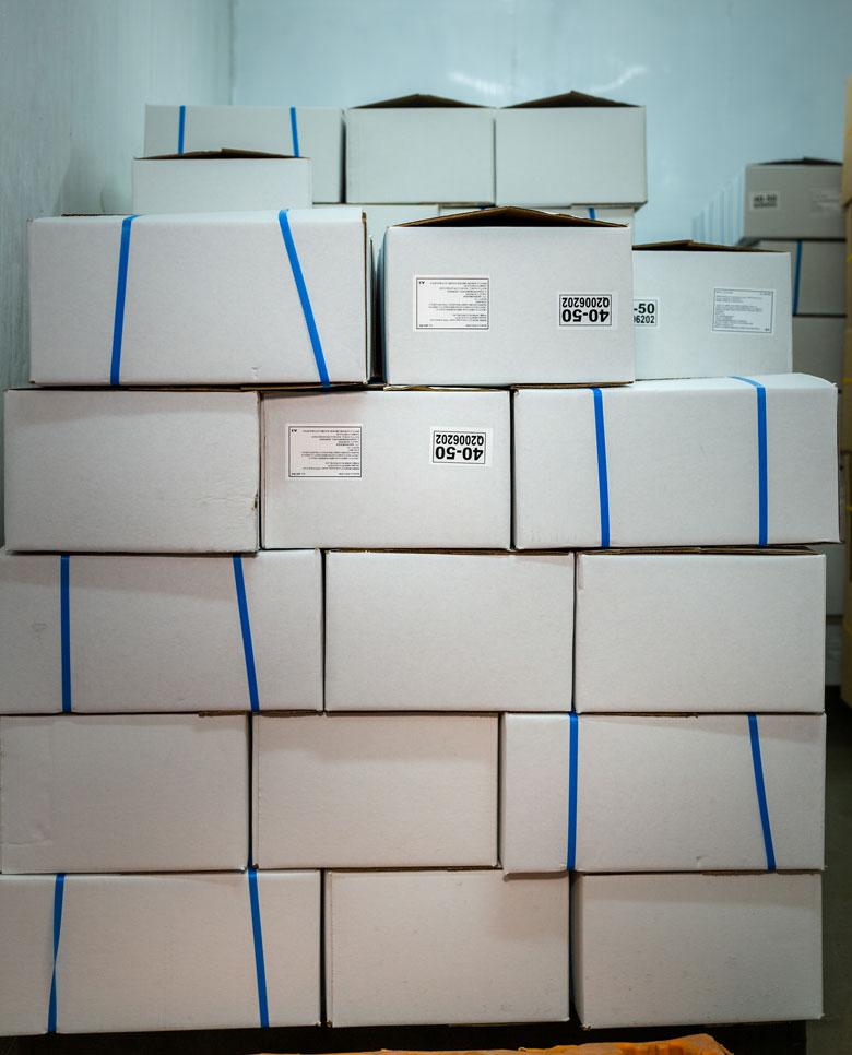 cajas-de-camaron